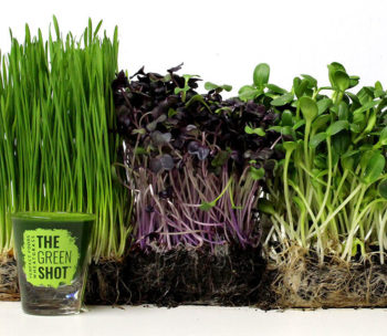Wheatgrass and Microgreens Perfect Foods
