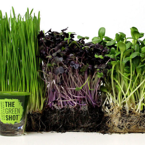 Wheatgrass and Microgreens Perfect Foods