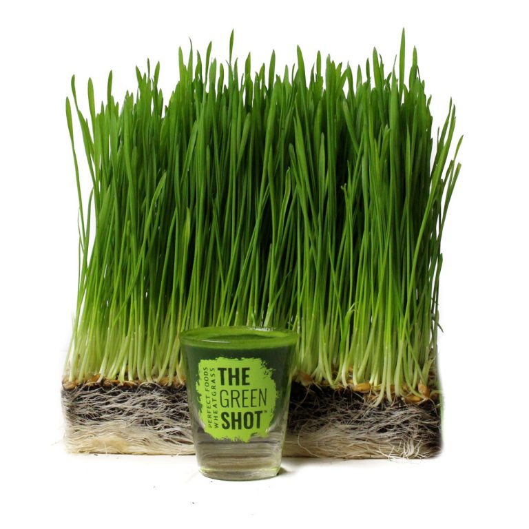 wheatgrass Perfect Foods New York