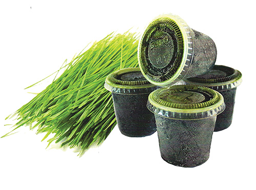 frozen wheatgrass benefits