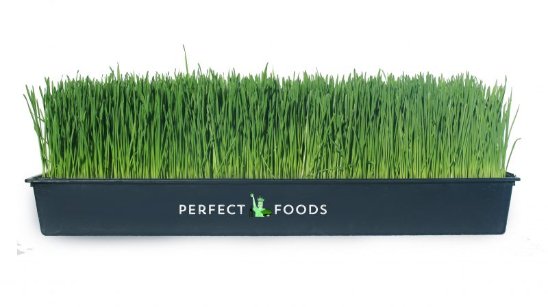 Wheatgrass Tray Perfect Foods