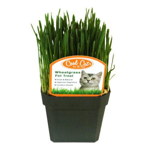 Health Food Stores / Supermarkets | 800wheatgrass.com