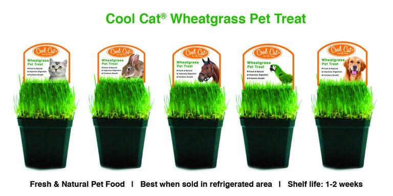 cool cat wheatgrass pet treat flyer 1