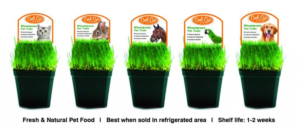 cool cat wheatgrass pet treat flyer1