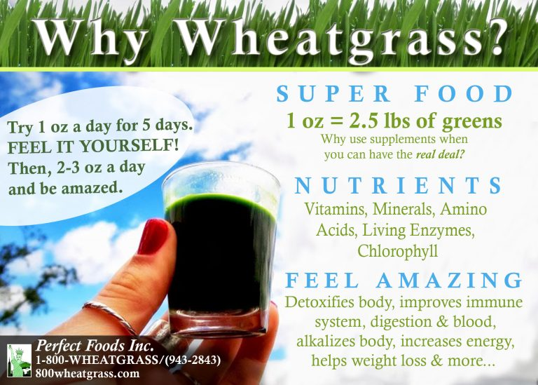 5X7why wheatgrass OFFICIAL AUG
