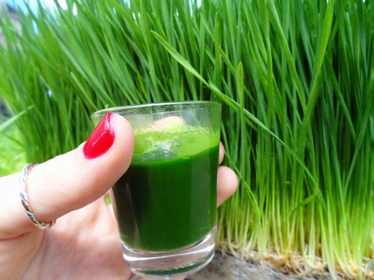 wheatgrass juice shot
