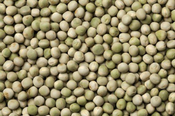 pea seed for microgreens