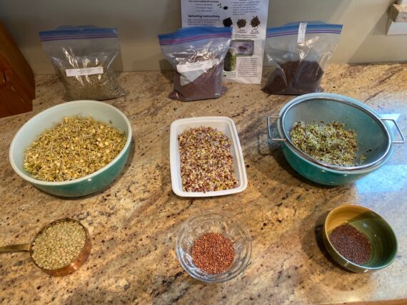 beginner sprouting kit 2