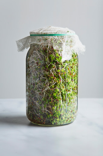 broccoli sprouts jar