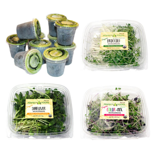 wheatgrass microgreens