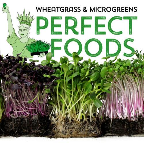 perfect foods wheatgrass microgreens