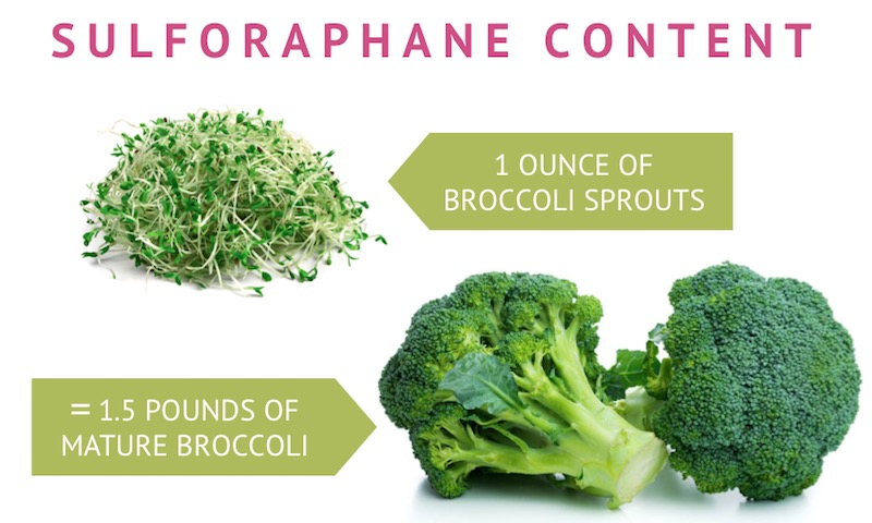 sulforaphane content